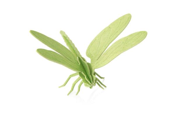 Lovi  3D Libelle 10 cm hellgrün Postkarte Birkenholz